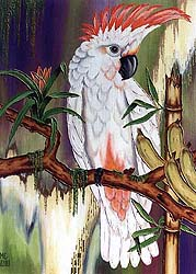 Cockatoo, ©2000, MCBozzoli [Click for details]
